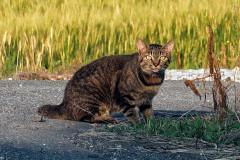 Nasraná kočka