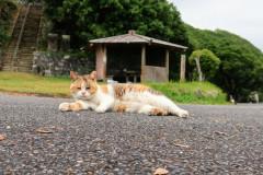 Kočka přítulná