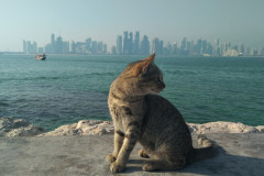 Kocour z Dauhá
