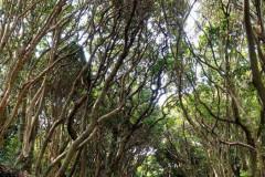 Ashizuri Forest