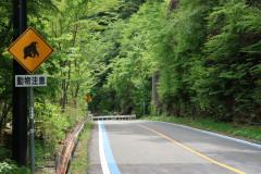 Road to Mt. Ishizuchi