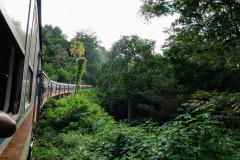 train in the jungle